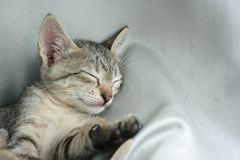 cat sleep tight on soft white bed. Royalty Free Stock Photo