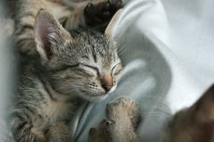 cat sleep tight on soft white bed. Stock Images