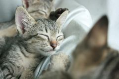 cat sleep tight on soft white bed. Stock Photo