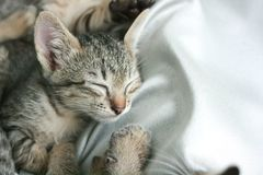 cat sleep tight on soft white bed. Royalty Free Stock Photography