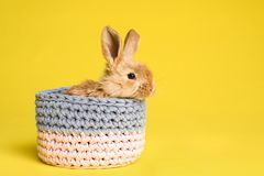Adorable furry Easter bunny in basket on color background. Space for text royalty free stock image