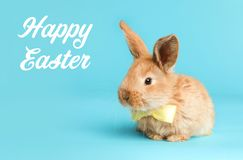 Adorable furry Easter bunny with cute bow tie stock photo