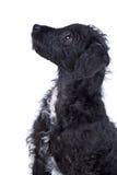 Adorable Gato-uno-Doodle el perrito Foto de archivo libre de regalías