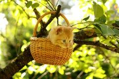 Adorable ginger kitten sitting in the basket Royalty Free Stock Image