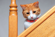Adorable ginger kitten sitting on wooden steps. Stock Photos