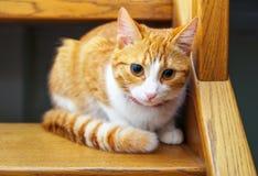 Adorable ginger kitten sitting on wooden steps. Stock Image