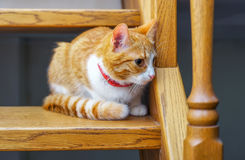 Adorable ginger kitten sitting on wooden steps. Royalty Free Stock Images