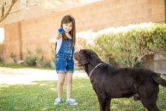 Sweet little girl holding blue ball playing with pet dog Stock Photo