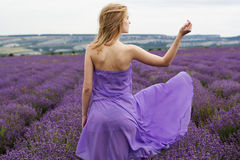 Adorable girl in fairy field of lavender Royalty Free Stock Image