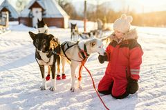 Little girl with husky dog. Adorable girl having a cuddle with husky sled dog in a farm in Northern Norway Royalty Free Stock Image