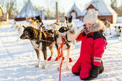Little girl with husky dog. Adorable girl having a cuddle with husky sled dog in a farm in Northern Norway Stock Photos