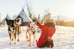 Little girl with husky dog. Adorable girl having a cuddle with husky sled dog in a farm in Northern Norway Stock Image