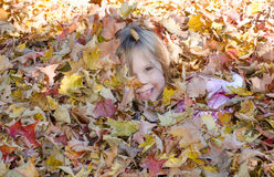 Adorable girl hiding in a pile of fall leaves Royalty Free Stock Image
