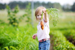 Adorable girl picking carrots in a garden Stock Photos