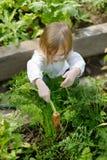 Adorable girl picking carrots in a garden Stock Photography