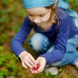 Adorable girl picking foxberries in the forest Stock Photography