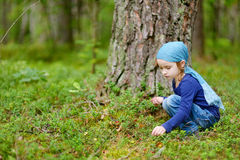 Adorable girl picking foxberries in the forest Royalty Free Stock Image