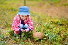 Adorable girl picking foxberries in the forest Royalty Free Stock Photo