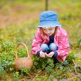 Adorable girl picking foxberries in the forest Stock Image