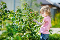 Adorable girl picking raspberries in a garden Stock Photography