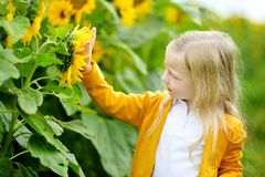 Adorable girl playing in blooming sunflower field on beautiful summer day. Stock Images