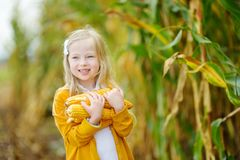 Adorable girl playing in a corn field on beautiful autumn day. Pretty child holding a cob of corn. Harvesting with kids Stock Photos