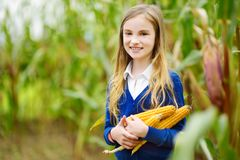 Adorable girl playing in a corn field on beautiful autumn day. Pretty child holding a cob of corn. Harvesting with kids Royalty Free Stock Photos
