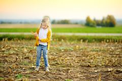 Adorable girl playing in a corn field on beautiful autumn day. Pretty child holding a cob of corn. Harvesting with kids Stock Photography