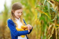 Adorable girl playing in a corn field on beautiful autumn day. Pretty child holding a cob of corn. Harvesting with kids. Stock Image