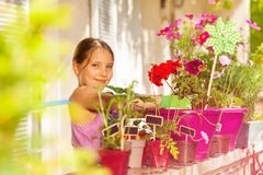 Adorable girl potting red geranium on the balcony. Portrait of preteen girl in gardening gloves potting red geranium on the balcony, smiling and looking at royalty free stock images