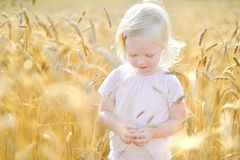 Adorable girl in wheat field on warm summer day Royalty Free Stock Photo