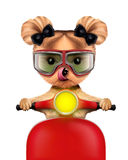 Adorable girl of yorkie sitting on a motorbike Royalty Free Stock Photo