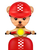 Adorable girl of yorkie sitting on a motorbike Stock Images
