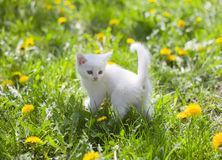 Adorable grey kitten Stock Images