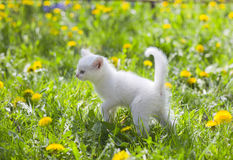 Adorable grey kitten Stock Image
