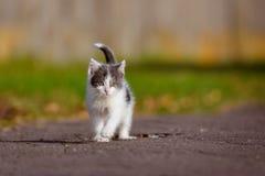 Adorable grey and white kitten outdoors Stock Photo