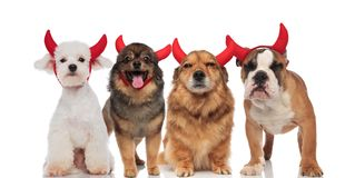 Adorable group of dogs wearing devil`s costume. For halloween while standing and sitting on white background, panting Royalty Free Stock Images
