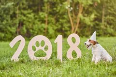 Adorable happy fox terrier dog at the park 2018 new year greetin Stock Image