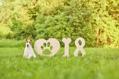 Adorable happy fox terrier dog at the park 2018 new year greetin Royalty Free Stock Photos