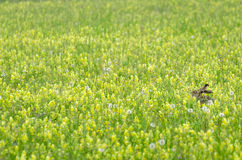Adorable hare in a rural landscape Royalty Free Stock Images