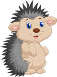 Adorable hedgehog cartoon was standing. Illustration of Adorable hedgehog cartoon was standing Royalty Free Stock Images