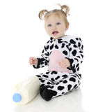 Adorable Holstein Stock Photography