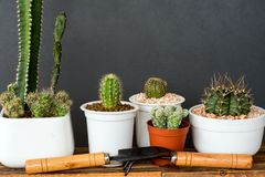 Adorable indoor cactus garden Stock Photos