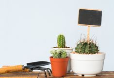 Adorable indoor cactus garden Stock Photo