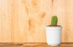 Adorable indoor cactus garden Royalty Free Stock Image
