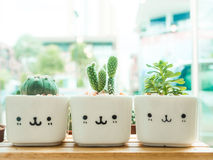 Adorable indoor cactus garden. Royalty Free Stock Photo