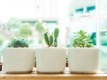 Adorable indoor cactus garden. Stock Photos