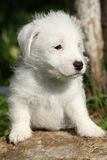 Adorable jack russell terrier puppy on some stone Stock Image