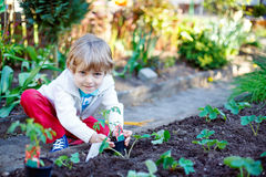 Adorable kid boy planting seeds of tomatoes Royalty Free Stock Images