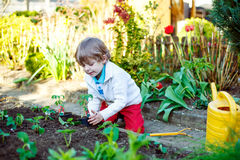Adorable kid boy planting seeds of tomatoes Royalty Free Stock Photography